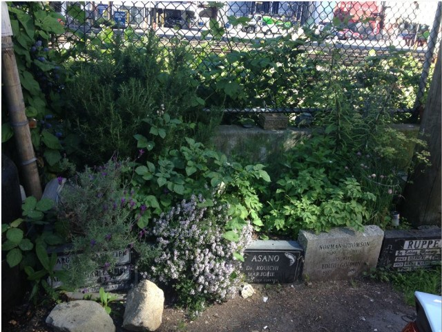 Rena's gravestone garden at Commercial and Powell